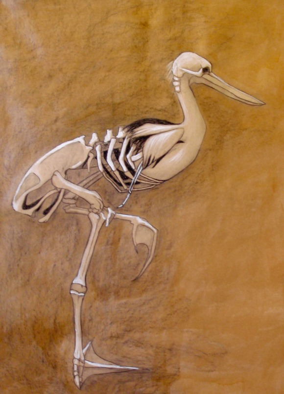 "Claire Marsh, 2010, ""skeleton composition"", conte, charcoal and shellac on butcher paper"